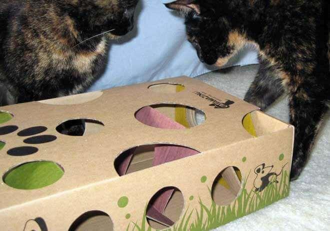 giochi intelligenza gatto