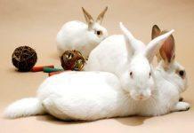 giochi per conigli nani