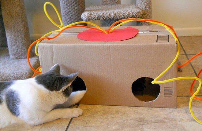 giochi per gatti fai da te interattivi