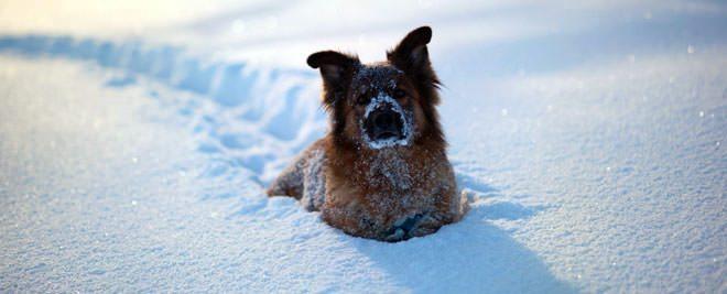 i cani sentono freddo