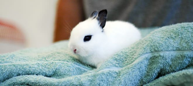 i conigli dormono con gli occhi aperti