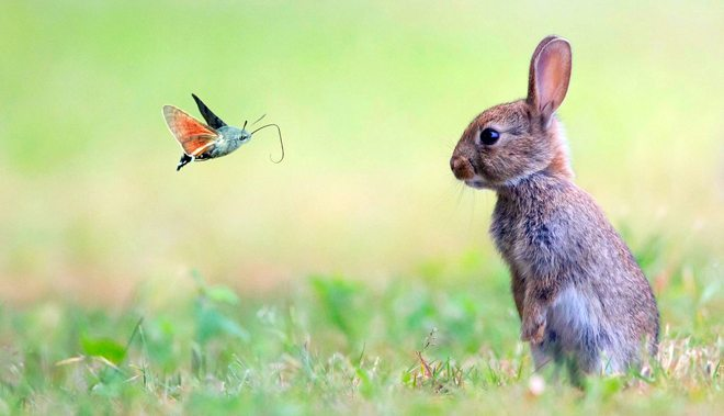 i conigli vedono a colori