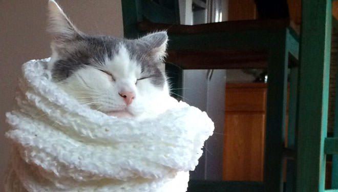 i gatti hanno freddo
