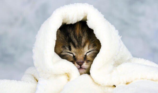 il gatto soffre il freddo
