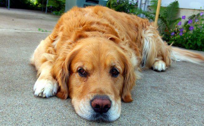 cane vomita e non mangia