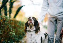 insegnare al cane a stare fermo