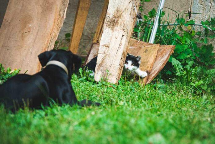 insegnare al cane a non rincorrere il gatto