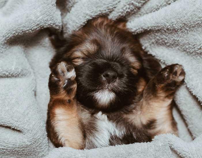 insegnare al cucciolo a dormire nella sua cuccia