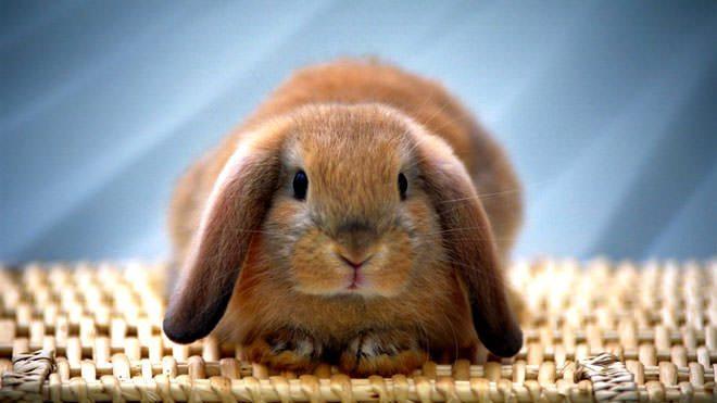 insegnare il nome al coniglio