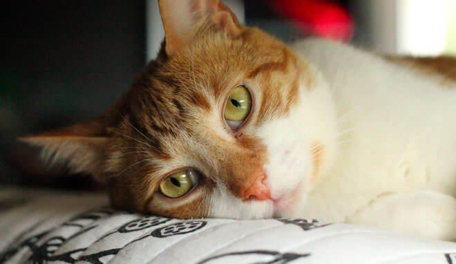 insufficienza renale nei gatti anziani