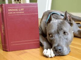 reati animali domestici