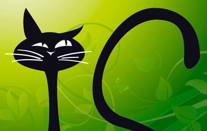 lettiera per gatti siria