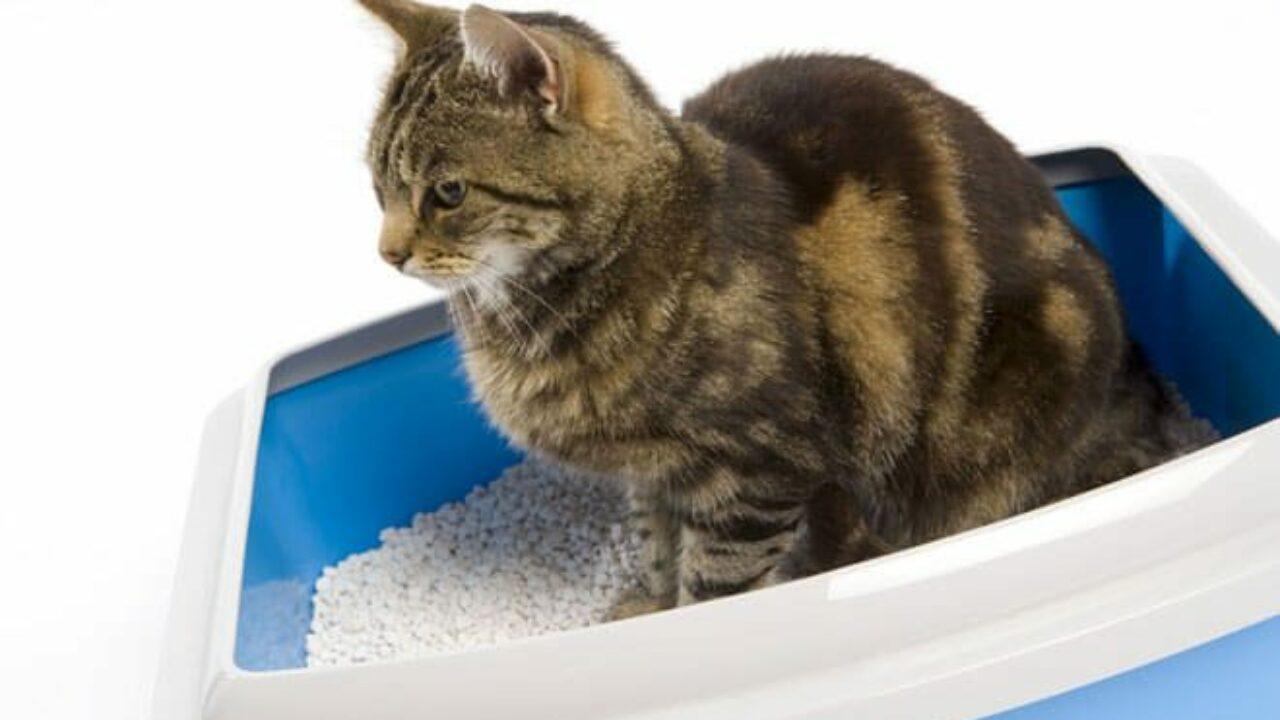 Costruire Lettiera Per Gatti miglior lettiera per gatti: quale scegliere e come pulire la