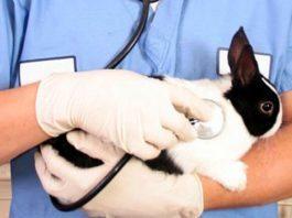 malattie dei conigli nani