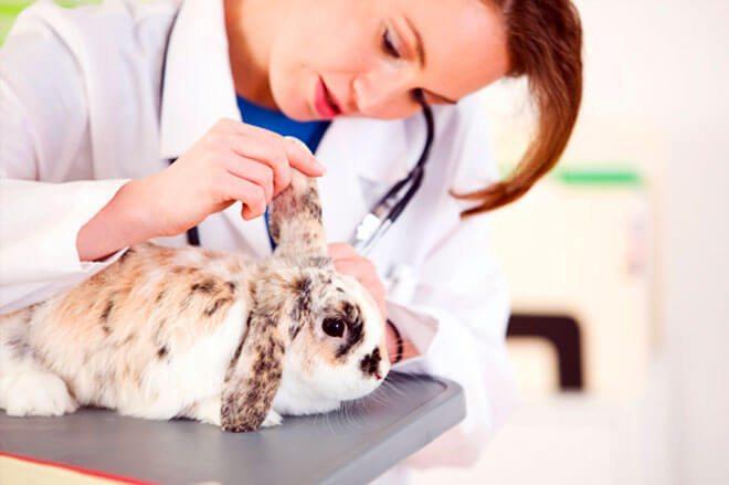 malattie coniglio nano