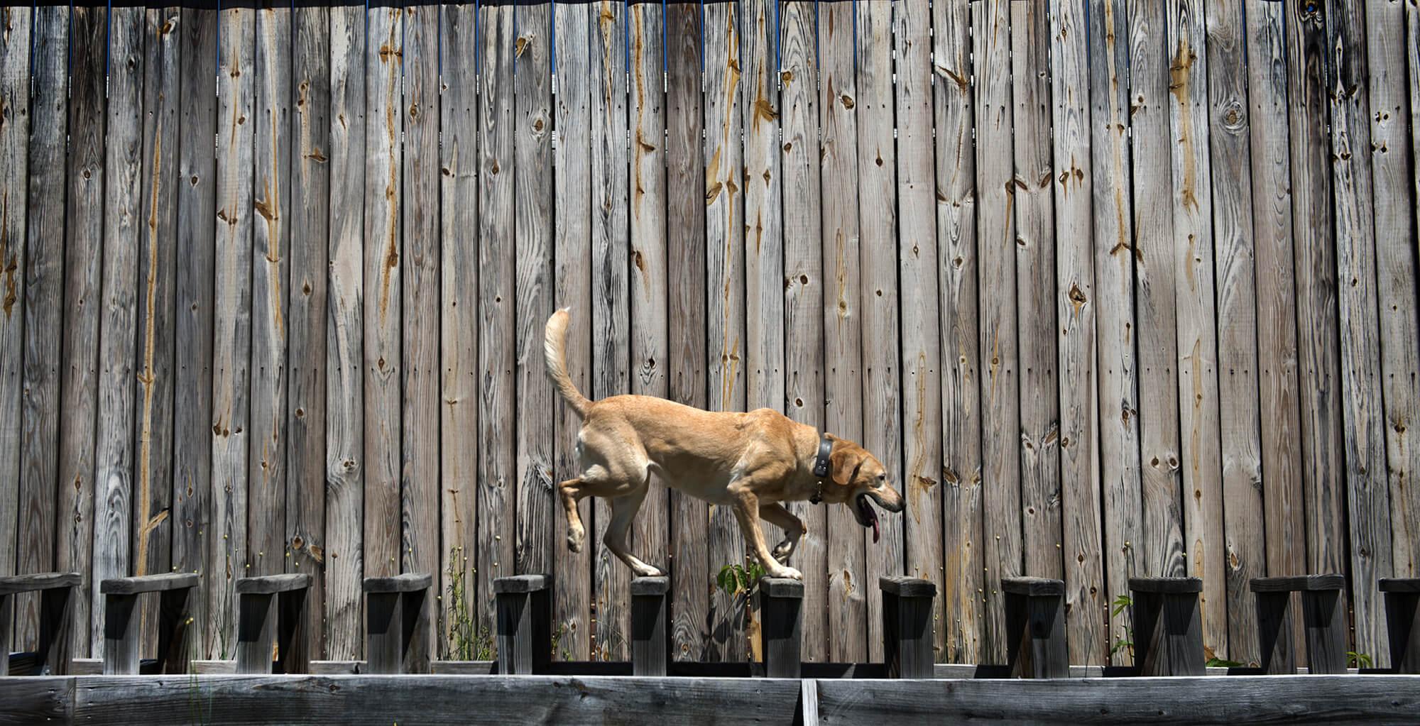 comportamento cani