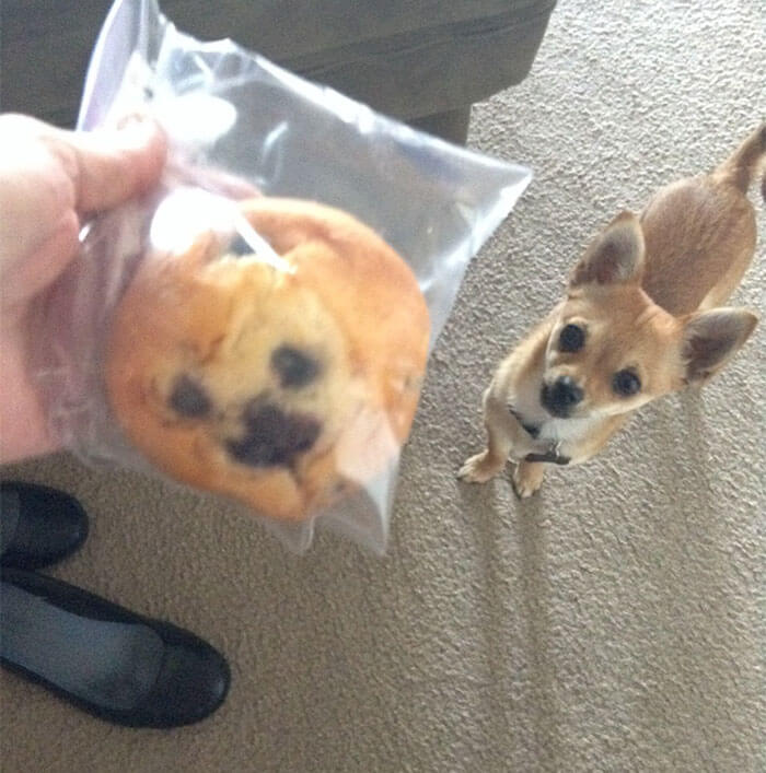 muffin cani