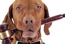 reato cura del cane