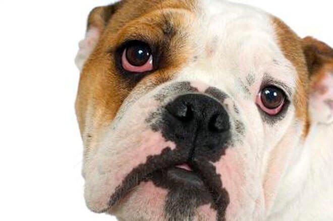 occhi rossi nel cane