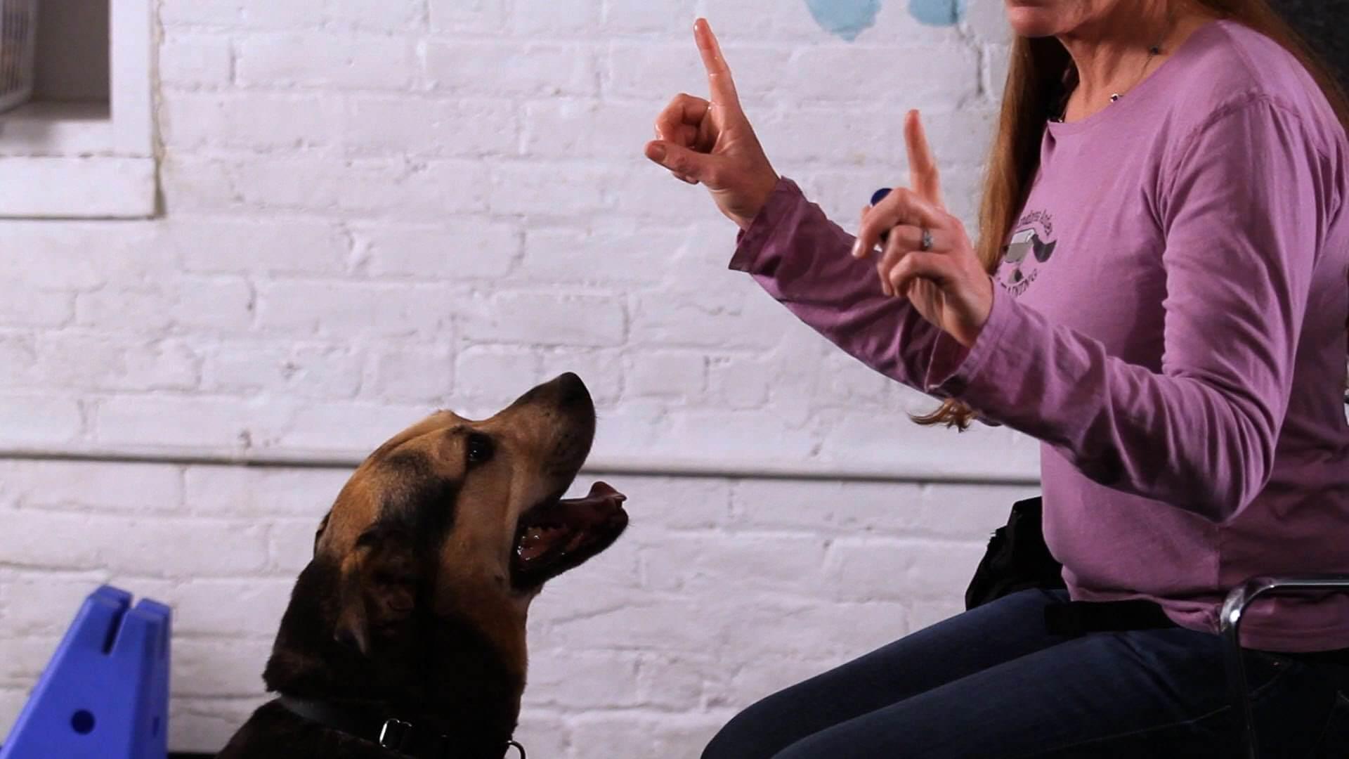 parlare con i cani