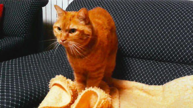 perche i gatti fanno il pane
