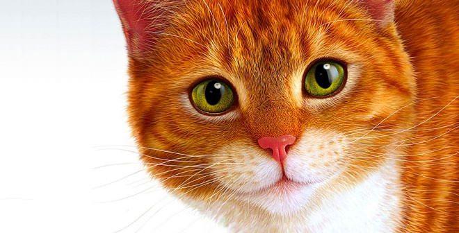 peritonite felina