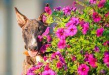 piante tossiche per cani