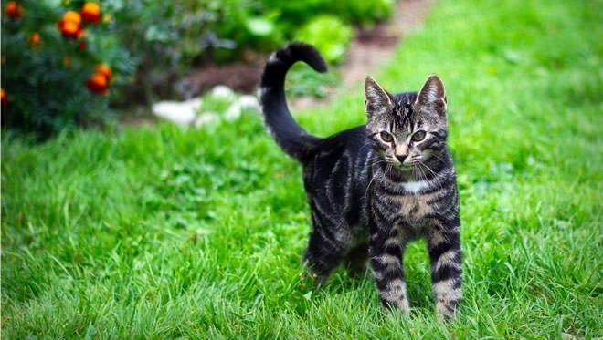 piante tossiche per gatti