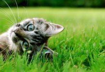 piante velenose per gatti