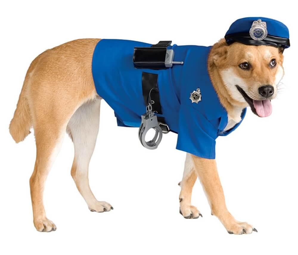 polizia maltrattamento animali