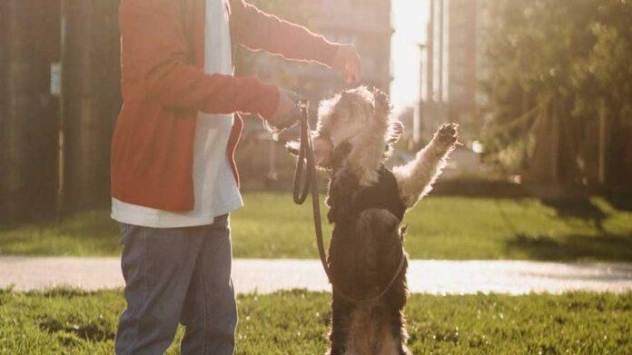 premietti per cani