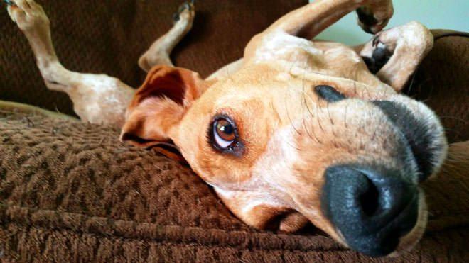 disturbi comportamentali del cane
