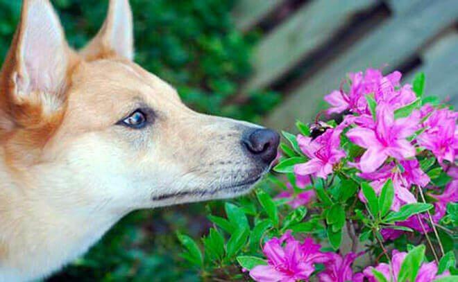 puntura di vespa nel cane