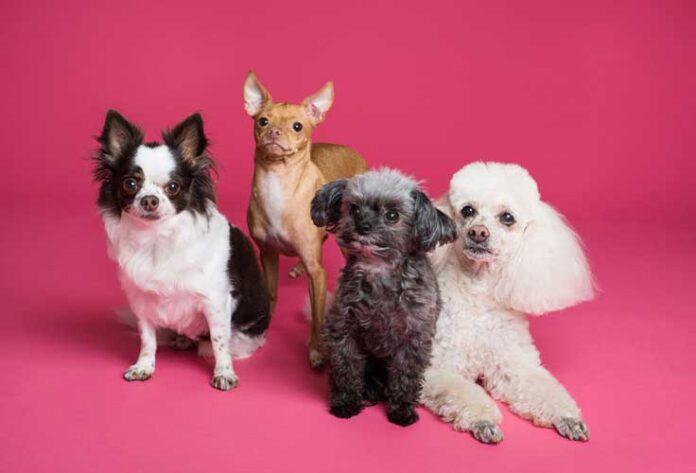 quale cane scegliere
