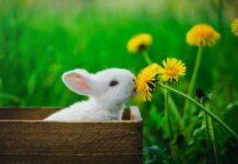 quale lettiera per conigli scegliere