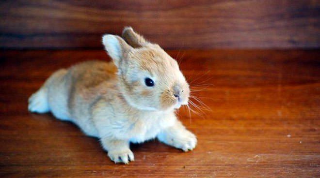quanti anni vive un coniglio