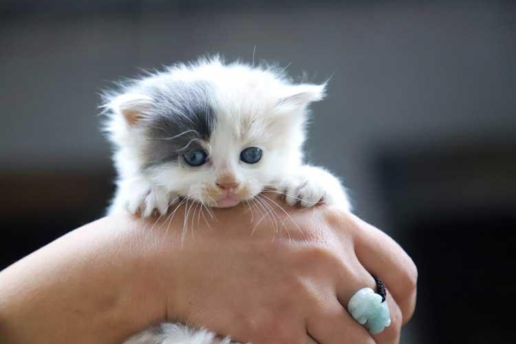 quanto costa vaccinare un gatto