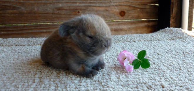 quanto dormono i conigli
