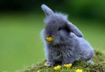 quanto vive un coniglio nano