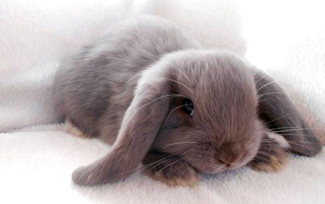 quanto vivono i conigli