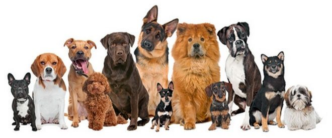 what breed of dog to choose