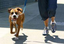 passeggiate con il cane