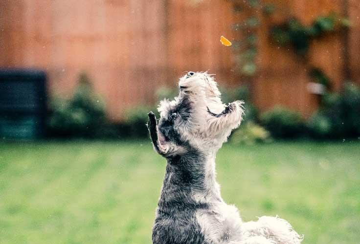 ricetta bocconcini cani