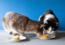 crocchette per gatti fatte in casa