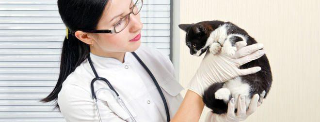 cura rinotracheite del gatto