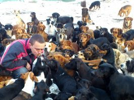 sasha salva cani randagi