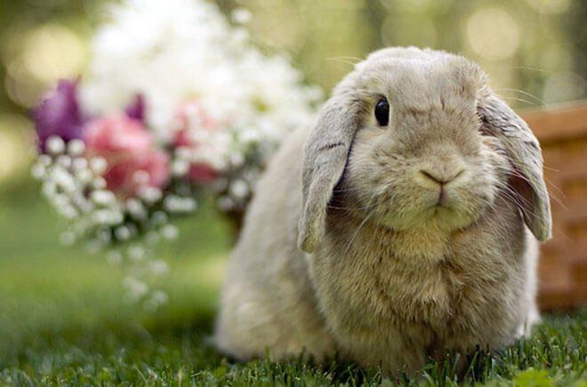 sesso coniglio
