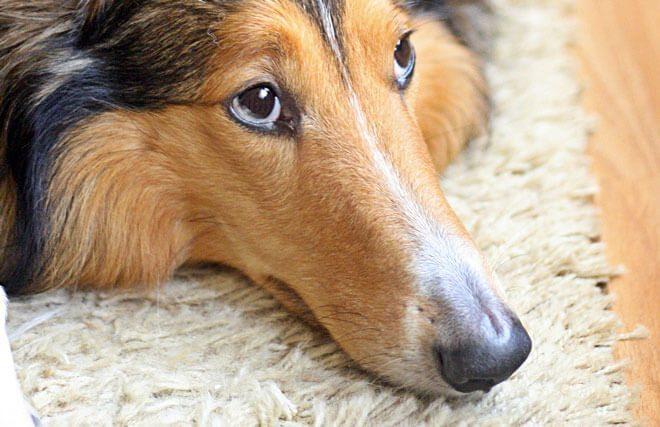 sintomi gastrite cane