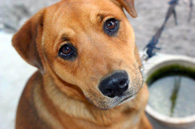 sintomi insufficienza renale cane