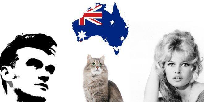 australia sopprimere gatti